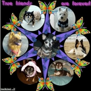 Picture frame from my friend Blossom on Dogchannel.com