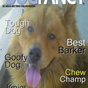 Dog Fancy cover made at Dogchannel.com