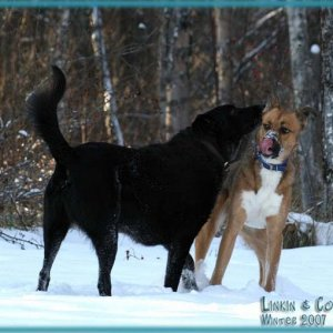 "Coal: ""Hold still while I eat this snow out of your ear"" Linkin: ""ugh, ewww! Get away from me Coal!"""