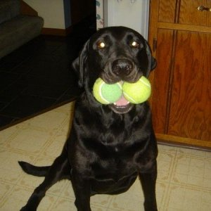 My Dog's got some Balls. ~Mya