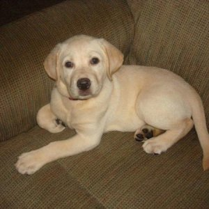 This is Sophie the day after we got her.  We got her Aug. 19, 2007 and she was born on June 8, 2007.