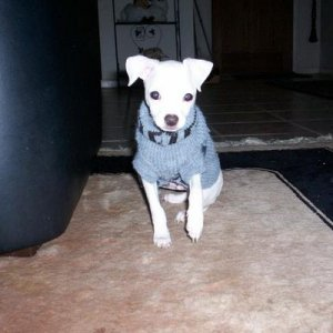 This is my baby Casper, when he was younger!