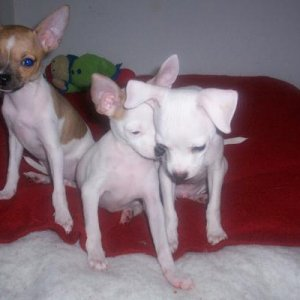 This is Lucy on the left, Gigi in the middle and Casper on the right!