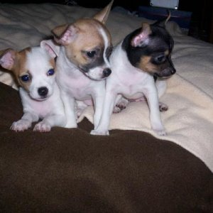 This is Ruby on the left, Bear in the middle, and Romeo on the right, when they were younger!