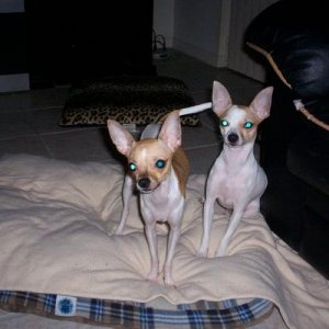 This is Lucy on the left, with her mom Angel on the right!