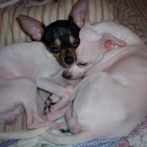 These are my babies Romeo on the left and Casper on the right, snuggling up together. I Love You Romeo and Casper.