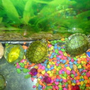 My Turtles