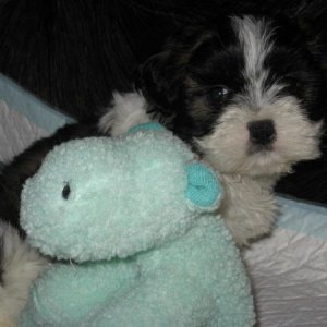 When we brought him home, June 22, him and his stuffed toy which looks huge compared to him.