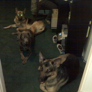 The Gang!  Sitting outside the kitchen waiting to get dinner:)
