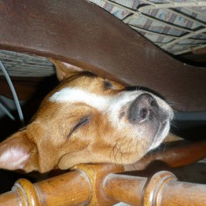 She wedged herself under the couch and napped.