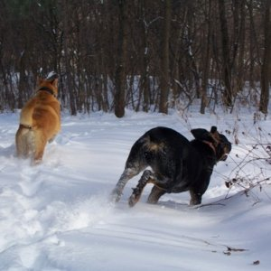 Hemmi and Koda having a blast - lol