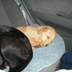 Daisy and Louis asleep in the car