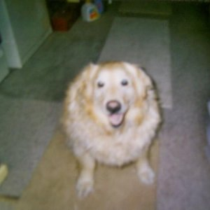 Malibu, haha my happy Overweight Golden Retriever. She is turning 10 years old in March. She also lives with my uncle.