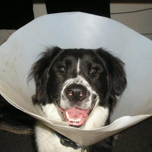 Never a sad face, not even on cone-day