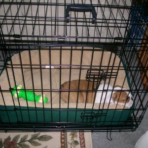 His new kennel and bed he is sleepin in