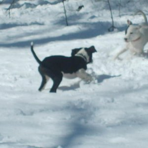 Playing in their first snow :)