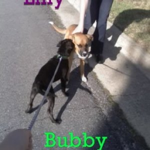 This is Bubby and Lilly. Lilly is no longer with us, and Bubby misses her a lot. That is why I am looking for another friend for Bubby to play with.