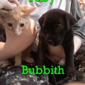 This is Bubby when I first got him. Toby is the kitty he is sitting next to. They dont get along very well, so Toby lives at my friend's house.