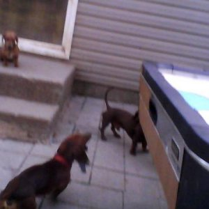 Charlie (on steps) Pickle (barking) Frodo (other)