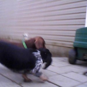 Samantha (in front) Frodo (in back)