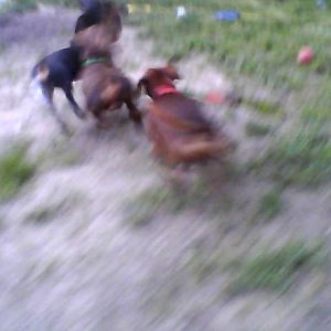 Samantha (front) Frodo (middle) Pickle (back)
