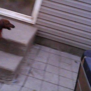 Charlie (in corner) Pickle (other)