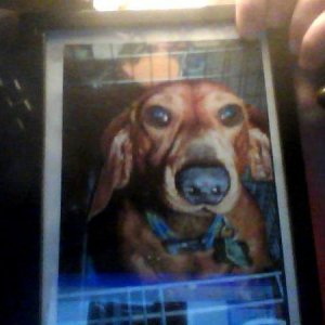 Picture of a picture Pickle