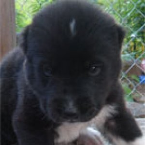 Female.color black. nickname Veshalya