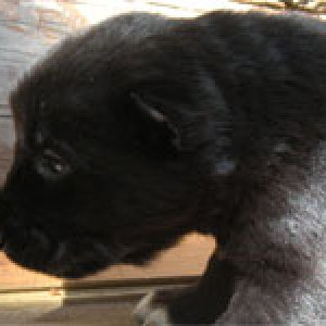 FEmale.color black. nickname Vefa