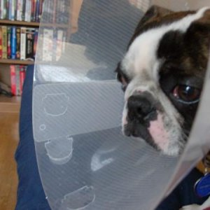 poor Buster, we cut off his manhood and made him wear a cone. We're such bad parents