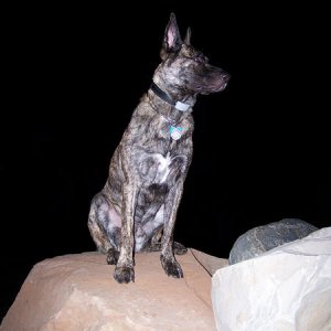 Nico on top of the rocks in our backyard at night.