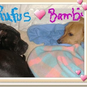 Foster Ruffus and Bambi