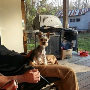 Kota man chillin on dads lap on the porch