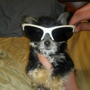 Haha! lookin sharp in dads sunglasses. Was ready to pick up some ladies lol
