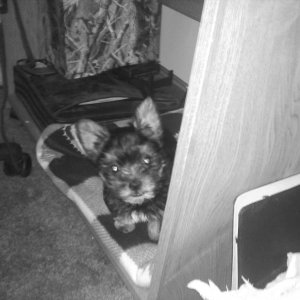 He loved that one spot under the desk for a long time lol