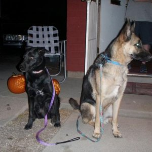 Zeus and Sheba on Halloween night.