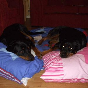 Holly and Archie (RIP Boy)