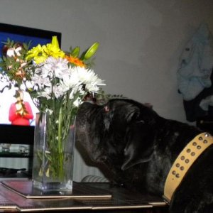 Yinca...Sniffing the flowers to check they wouldnt be yummy!