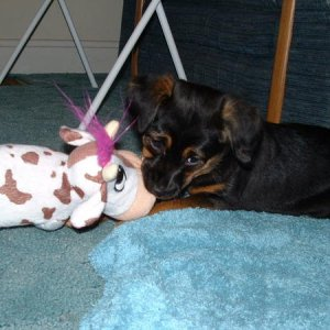 Flash and her cow Daisy.