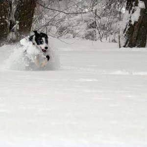 "This is her trademark move during deep snow storms. This snow was 26"" deep."