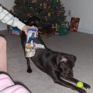 Think I'll just ignore those clippers Santa brought and focus on this ball and that bone!
