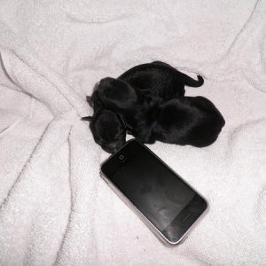 2 puppies, not even bigger than an iPhone....