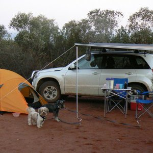 Car camping with dogs