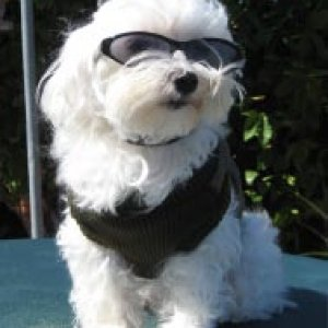 "Houdini looking way cool in his ""bomber boy"" jacket and his ray bans!"
