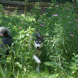 Tara & Timber romping through the wildflowers - we ARE so blessed