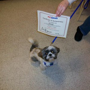 Kosmo with his certificate from graduating training class