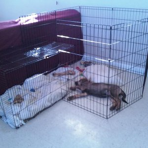 Lucas sleeping in his cage/play pen thing I made when he was to small to get out of it lol.