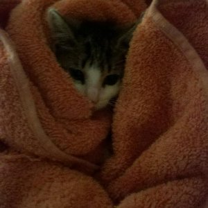 She loved being all wrapped up and warm!