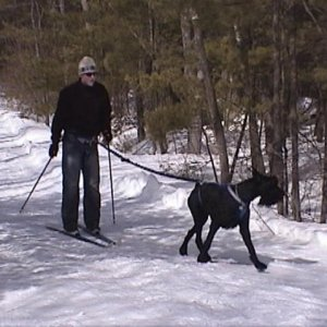 Skijoring with Big Jake