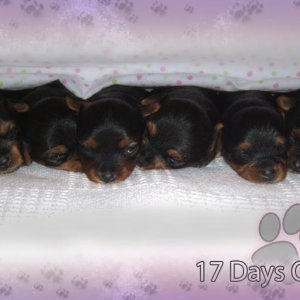 Previous litter 17 days old